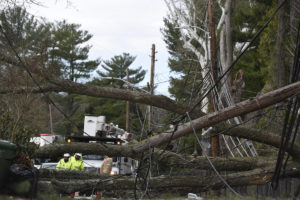 How Wind Affects Mobile Signal - Utilities workers standing near truck looking at trees tangled with telephone pole